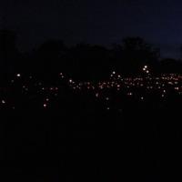 candlelights5.jpg